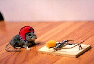 Rato a arriscar vida