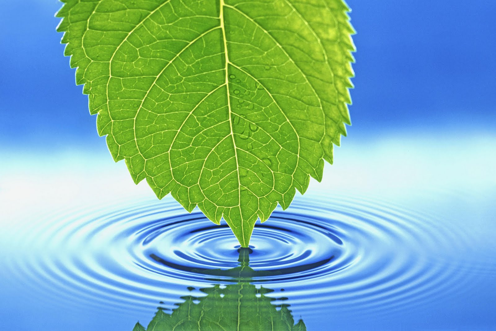 http://2.bp.blogspot.com/-du2LDKccK5M/UB0BxR2oSbI/AAAAAAAACHk/tIhQZAv2t2A/s1600/Nature+www.telugu-wallpaper.blogspot.com+(14).jpg
