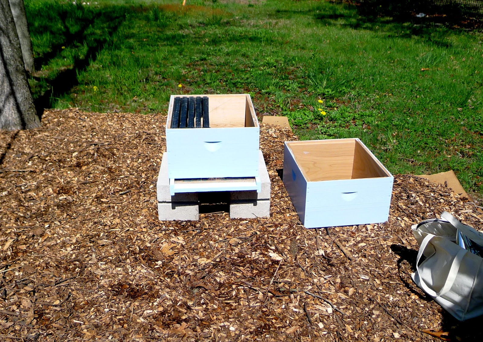 installing a nuc of bees, master gardeners, urban farming