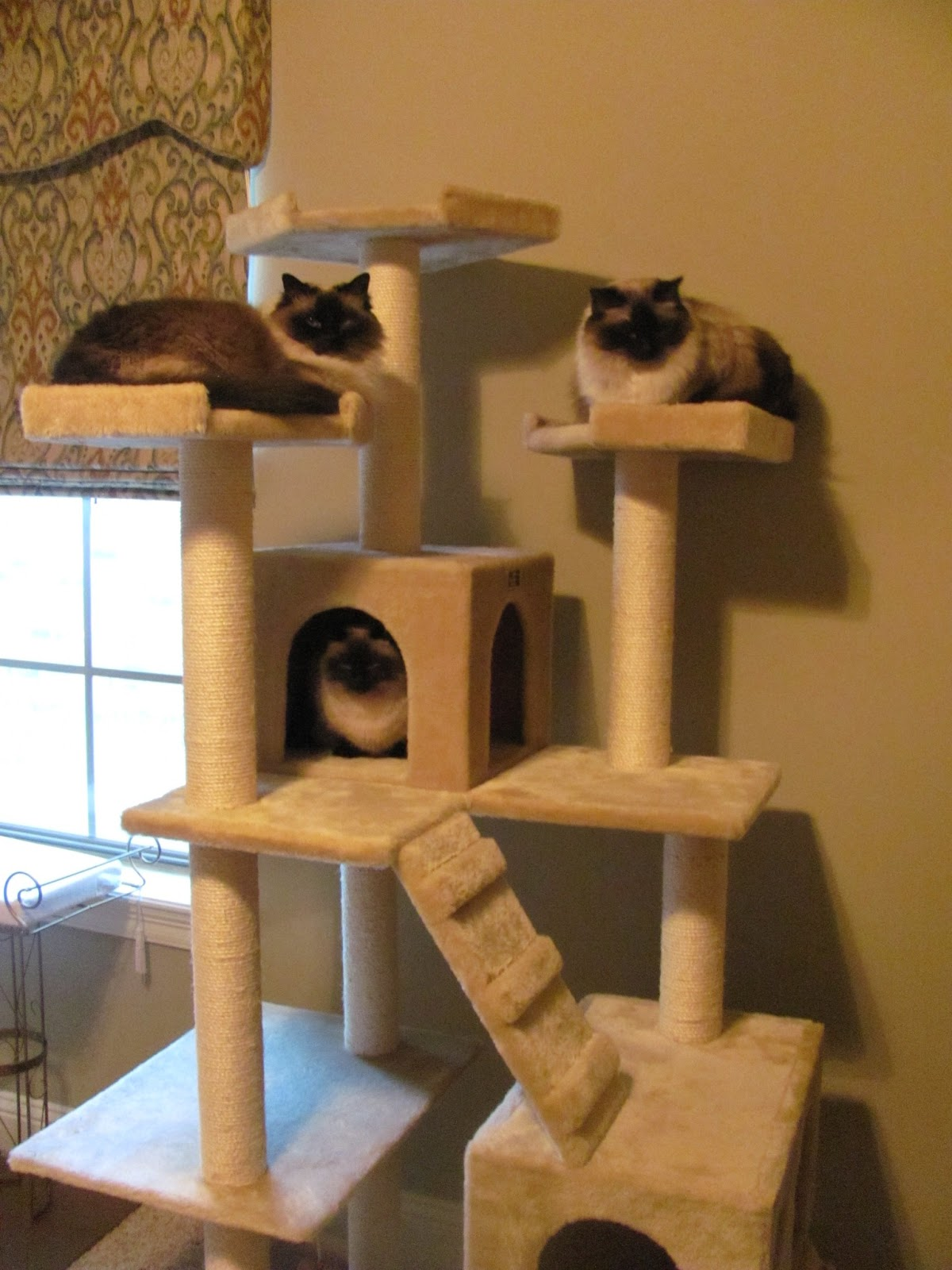 Jacquelines Cat House Tree Girls