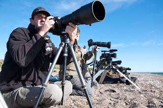 Een weelde aan fauna voor fotografen en filmproducenten Valdés Schiereiland