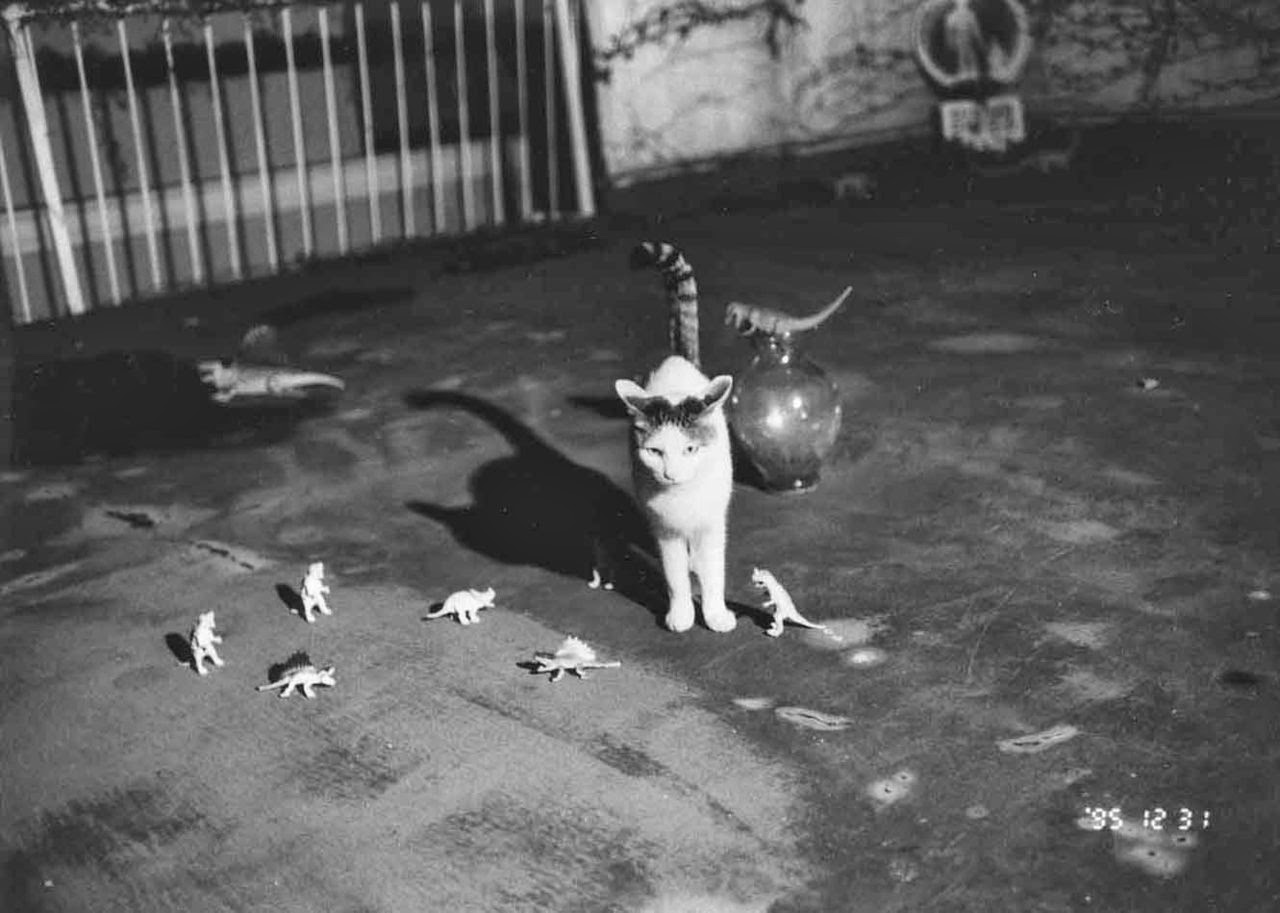 the cat ladies   u00a9 nobuyoshi araki