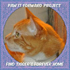 Tigger Desperately Needs a Home.