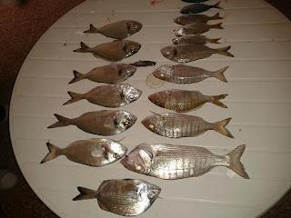 pesca de doradas