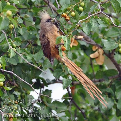 AmbiWeb: Qué hacer cuando te encuentras un pájaro