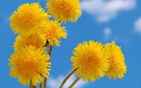 стихи детские про желтый одуванчик