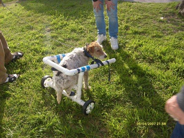 Hogares para mascotas sillas de ruedas para perros for Sillas para perros