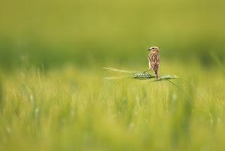Fotografias de animales salvajes 44