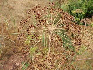Réussir ses semis - produire ses graines  Khgk+013