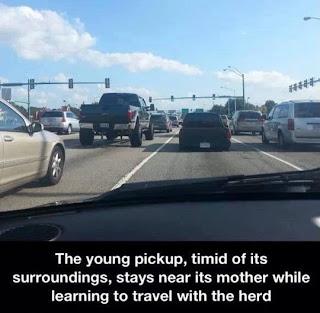 baby truck, baby pickup truck