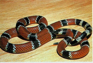principais cobras venenosas do Brasil