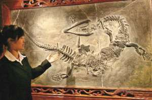 fosil naga