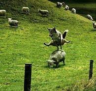 Sheeple, meh...