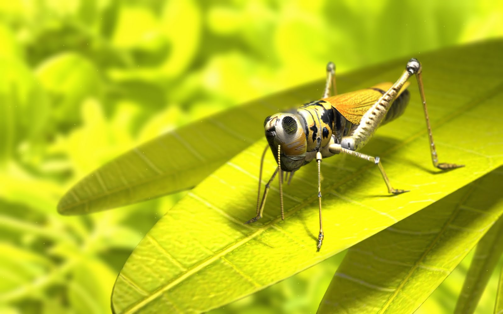 http://2.bp.blogspot.com/-dwyOsm743yI/TdpXbn-5nPI/AAAAAAAAADY/oSQMGFZwg5Y/s1600/wallpaper_grasshopper.jpg