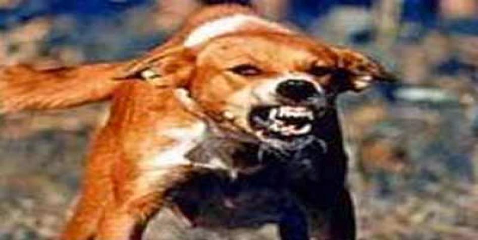 kenali penyakit rabies pada anjing anda apakah terkena atau tidak