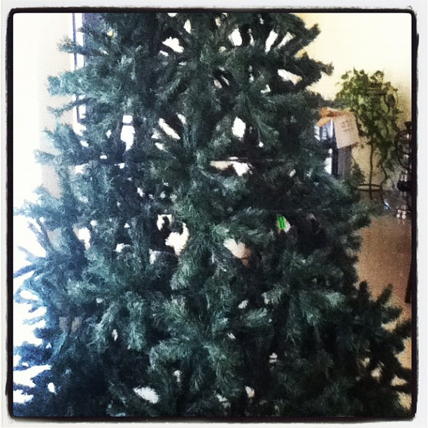 Setting Up Our Christmas Tree