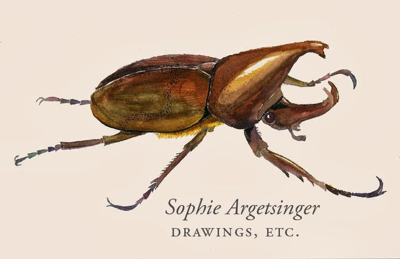 Sophie Argetsinger