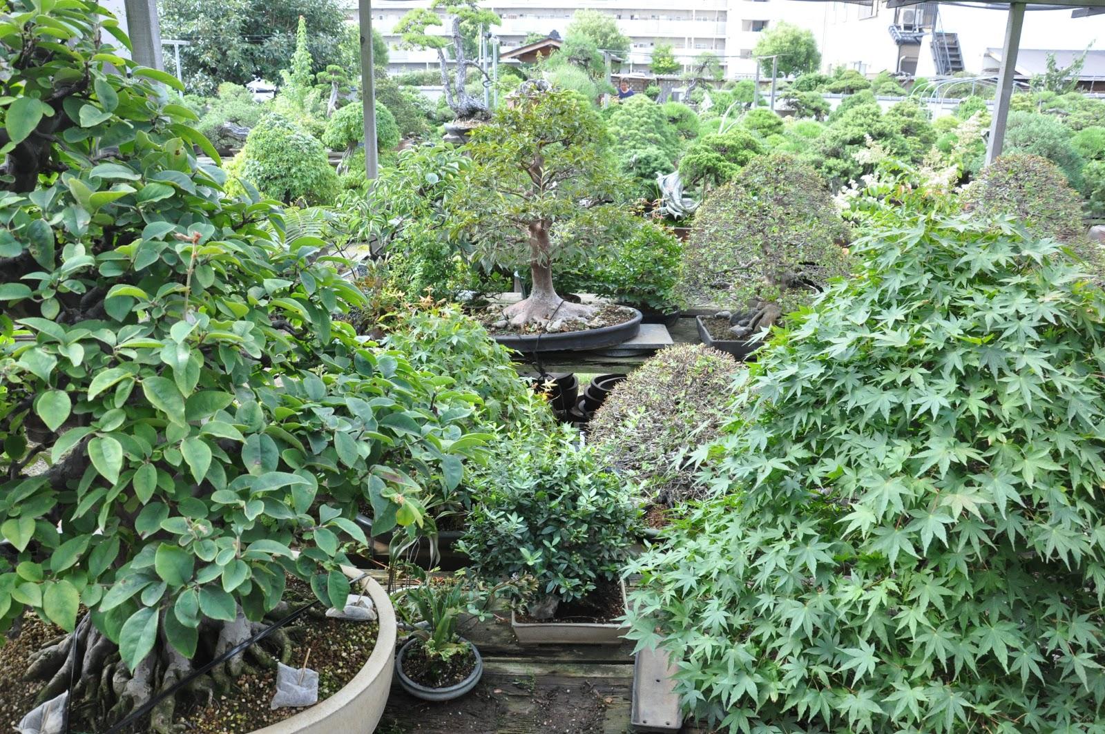 All In One Bonsai And Ceramics Bonsai In Japan