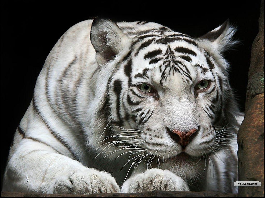 Fantastica Animal: Jul...