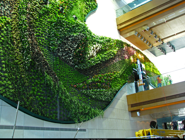 jardines verticales de blanc y la arquitectura vegetal