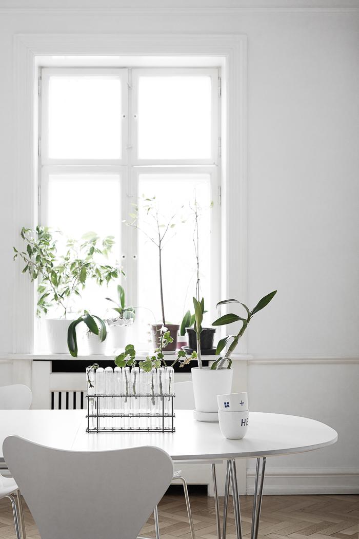 Mesa con plantas en probetas de cristal
