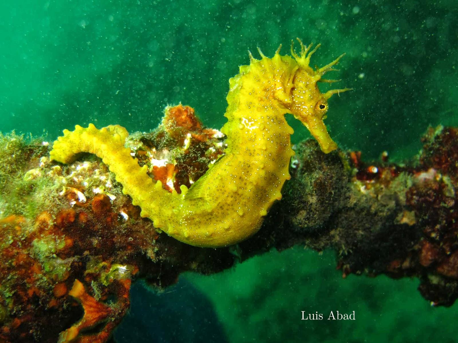 Protejamos las maravillas del mar los sign tidos peces - Fotos de peces del mediterraneo ...