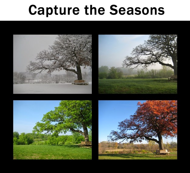 Rephotography: Seasonal Collage of an Oak Tree | Boost Your Photography