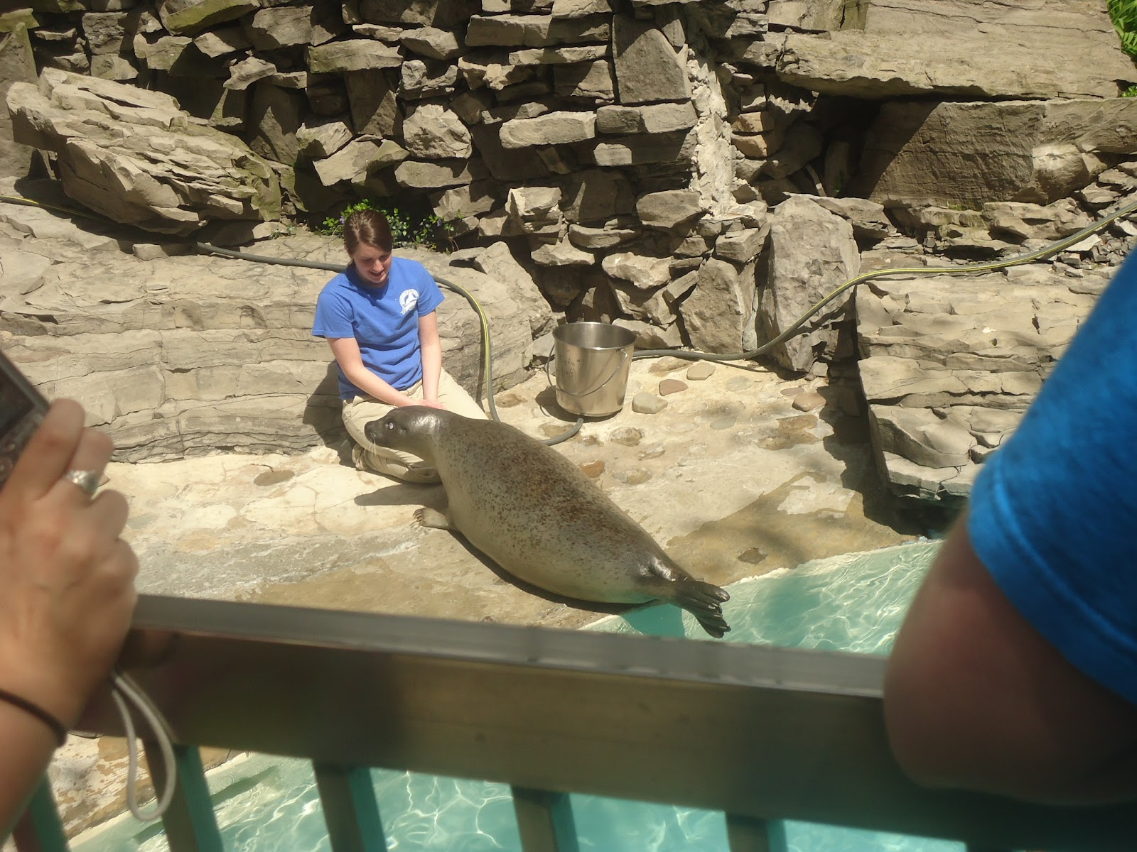 Fish aquarium in niagara falls - When We Arrived We Saw The Outdoor Seals Being Fed These Are Harbor Seals Every One Of Them Has A Different Sort Of Injury Or Disability That They Were