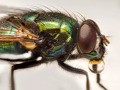 extreme macro photography using extension tubes