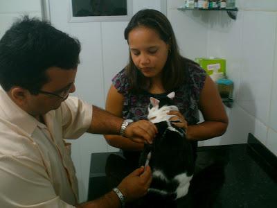 Tio Neto aplica vacina na gata Malu, da Renata Góes