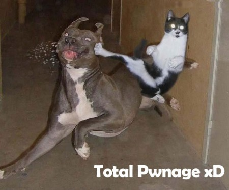 Funny Kang Fu Cat - Unbound State Humor Blog Funny Pictures