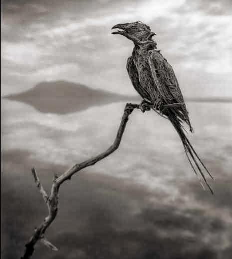 Calcified songbird.