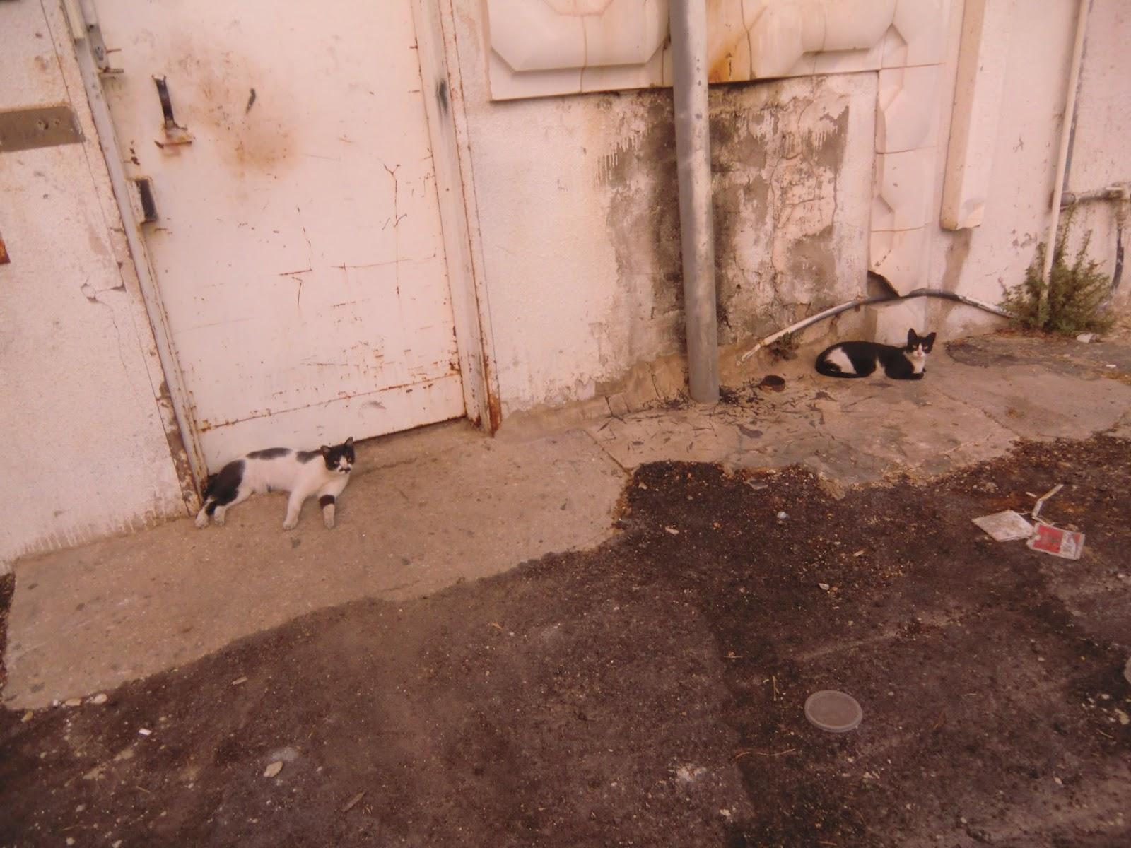 Коты-в-Тель-Авиве