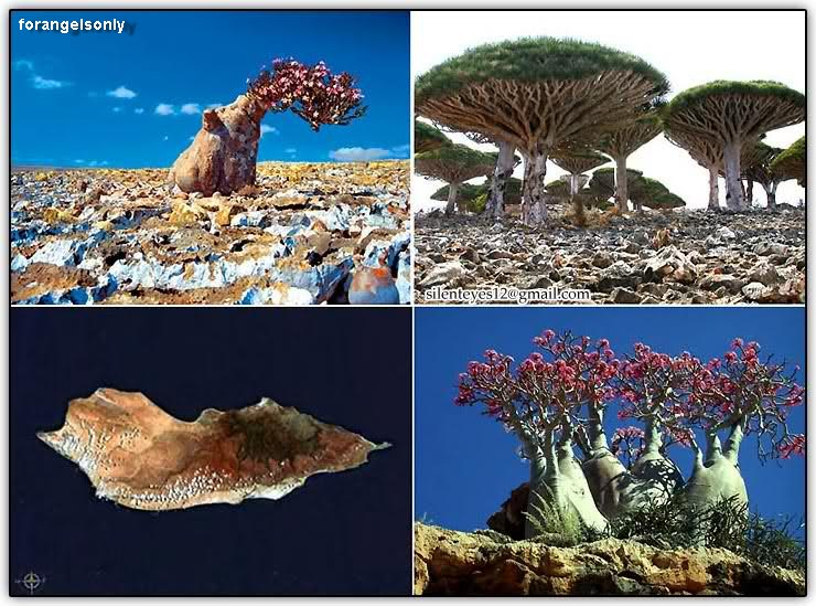 Click Here To Know About Socotra Island