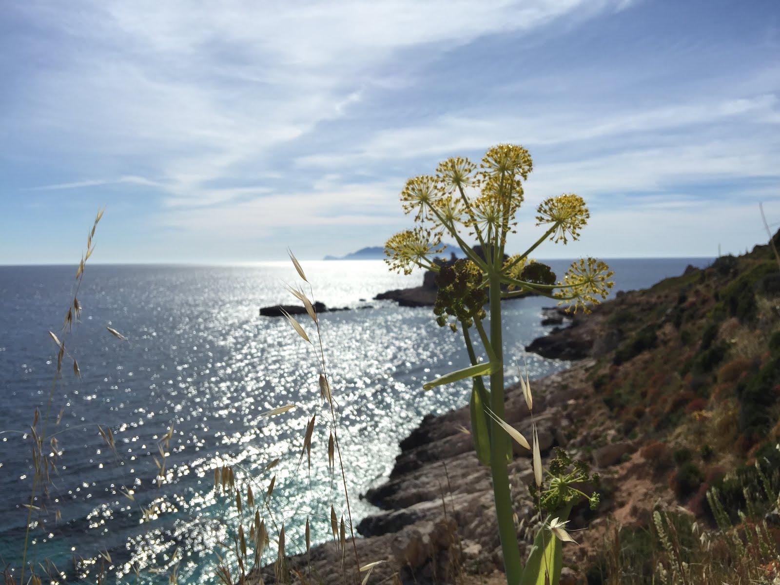 Sicilia,Maggio 2016,
