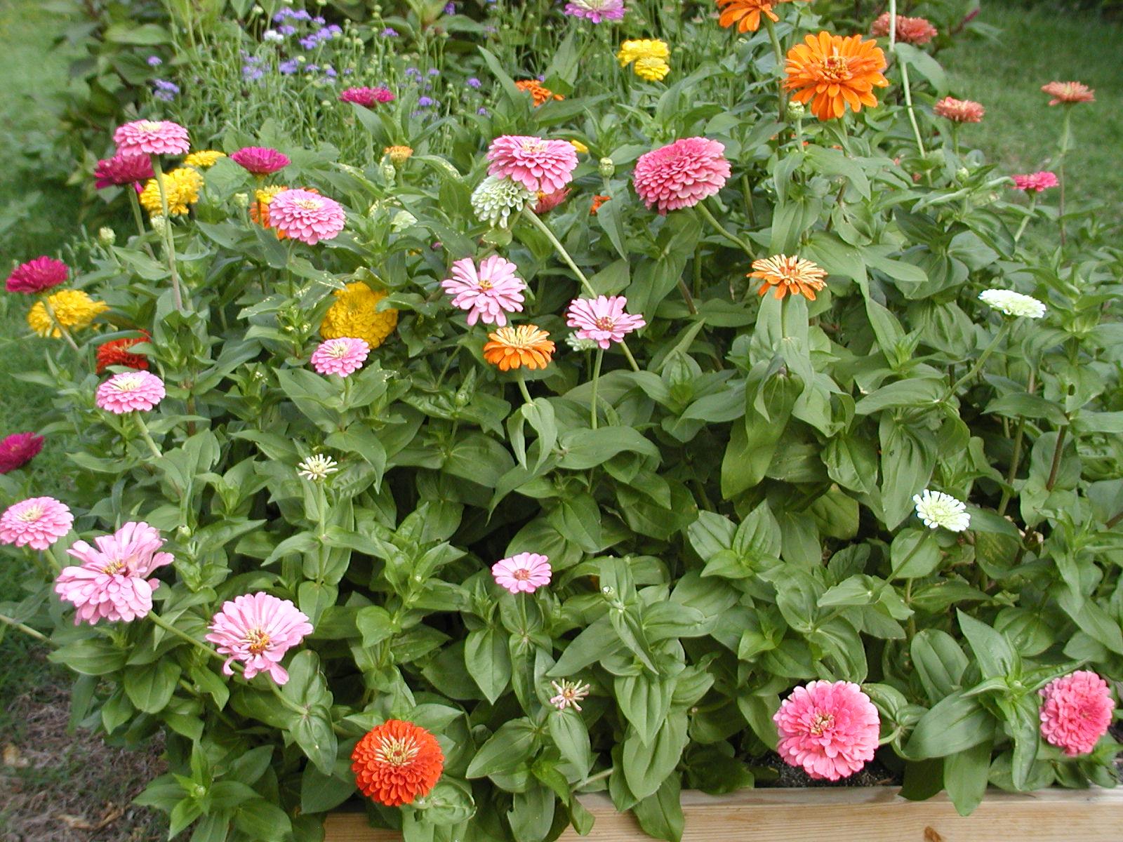 Gene 39 s garden cutting garden for Best flowers for cutting garden