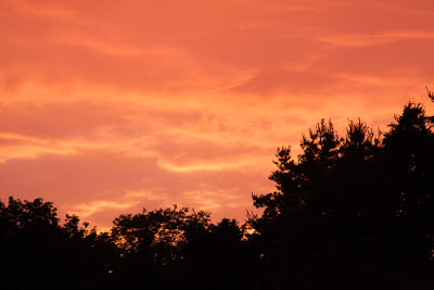 orange clouds over trees at sunset