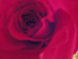 Valentine Bonnaire