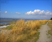 The high grasses bordering the beach around Mud Bay thrived magnificently . (beach )