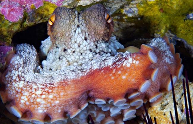 أجمل الأسماك الاستوائية الملونة   - صفحة 4 Colorful-tropical-fishes-29