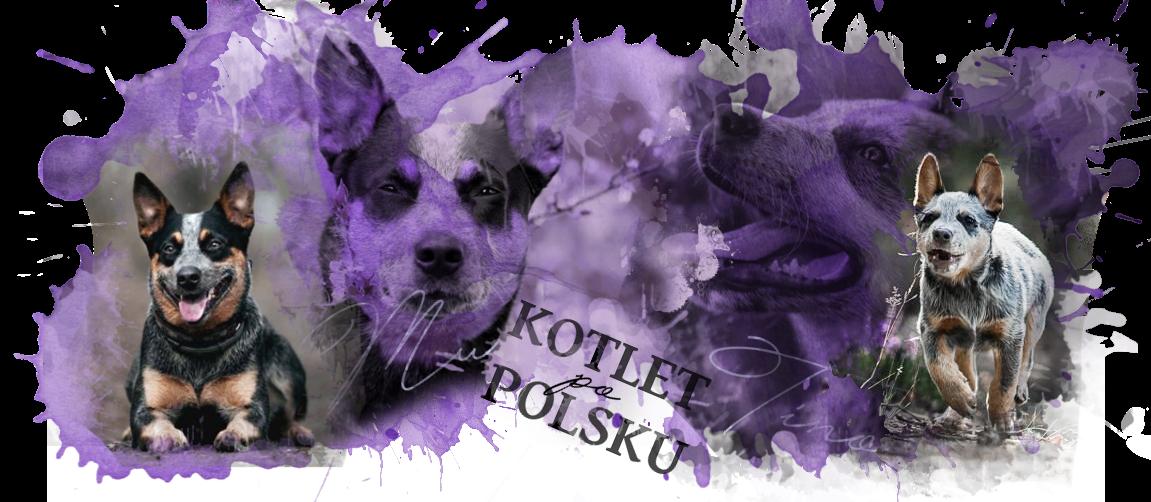Kotlet po polsku