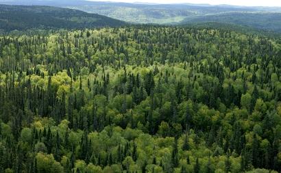 Plan Técnicos de Gestión Forestal