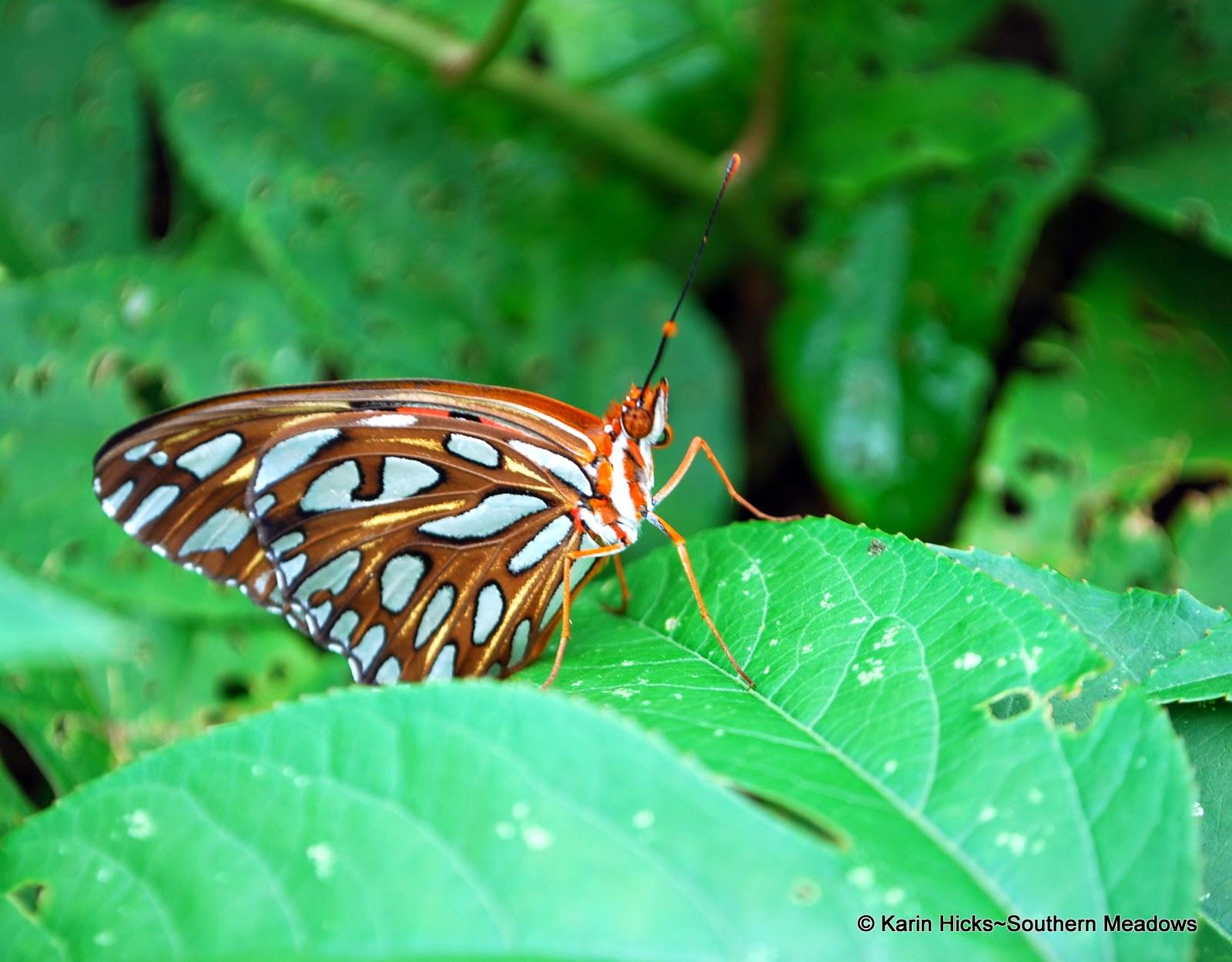 Southern Meadows: Beyong Butterflies