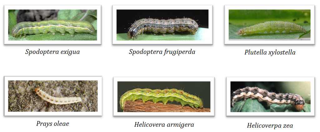Los rasgos de la reproducción de las setas de los parásitos