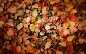 #9 Fall Leaves Wallpaper
