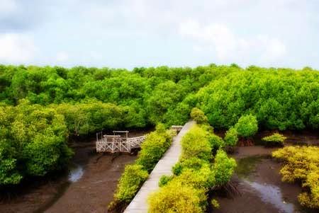 5 Objek Wisata Di Bali Wajib Anda Kunjungi Hutan Mangrove | www.indonesiaberprestasi.web.id