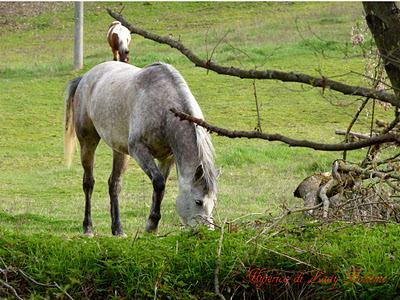hiperica_lady_boheme_blog_cucina_ricette_gustose_facili_e_veloci_cavallo_nel_prato_2
