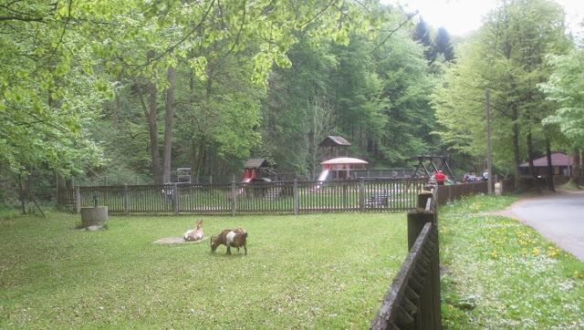 Bad Berneck: Spaziergang im Kurpark - Ziegen und Spielplatz