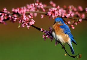 Olhai para as Aves do céu, que não semeiam, nem segam, nem ajuntam em celeiros...