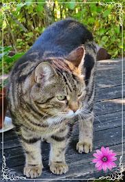 Malla-kissa